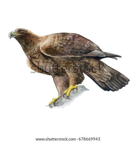Stock Photo Golden eagle isolated on white background. Watercolor. Illustration. Template. Image. Picture.