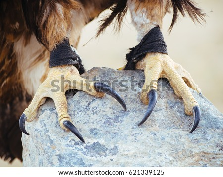 Shutterstock Golden Eagle Talons