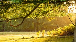Golden, early morning light shining through into a forest glade during autumn