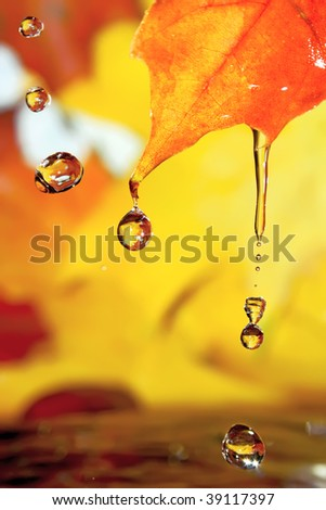 Golden fall drops. - stock photo