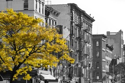 Golden fall tree in black and white NYC street scene on 2nd Avenue in the East Village of Manhattan, New York City