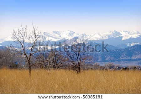 Golden field and bare trees on the Colorado prairie, with view of the Rocky Mountain Continental Divide.