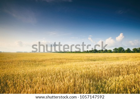 Golden Field and Beautiful Sky #1057147592