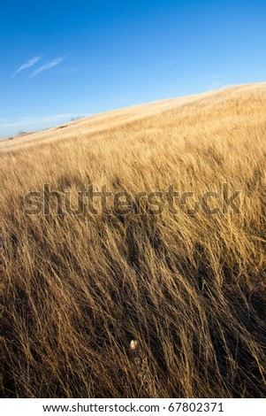 Golden fields and meadows portrait styled shot
