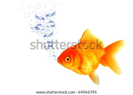 Golden fish breathing under water stock photo 64066396 for How do fish breathe underwater