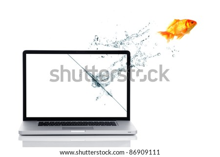 Golden fish get freedom from laptop screen.
