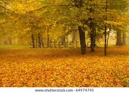 golden foliage in autumn