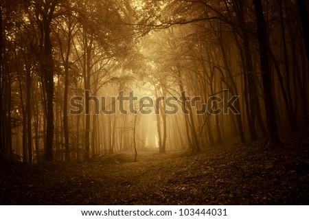 golden forest at sunrise
