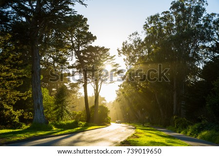 Golden Gate Park sunny scenery in San Francisco CA #739019650