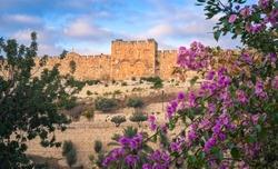Golden Gate with pink Bougainvillea bush, Old City Jerusalem