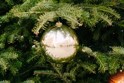 Golden glossy Christmas ball among green branches with needles.