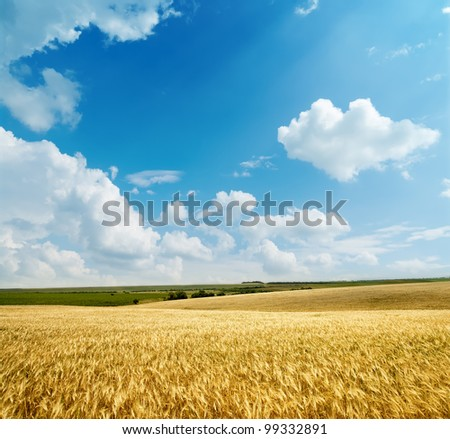 golden harvest under cloudy sky - stock photo