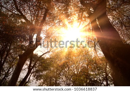 Golden heaven light Hope concept from above through trees branches abstract blurred background from nature
