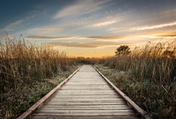 Golden hour landscape of a wooden hiking path surrounded by wild grass flowing in the wind in the wetlands of the Cosumnes River Preserve in Galt California with the sun setting on the horizon.