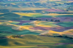 Golden hour sunset aerial view of The Palouse region of Eastern Washington State, as seen from Steptoe Butte State Park, of patchwork style rolling farmland and hills