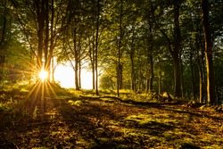 Golden hour with sun star in forest at Kullaberg national park in southern Sweden.