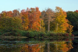 Golden Island in an Autumn Lake.  Destination Promised Land State Park in Pennsylvania