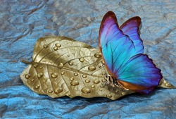 golden leaf in water drops. butterfly on dew drops. gold and blue background. watercolor paper painted in blue. bright morpho butterfly on a blue and gold background.