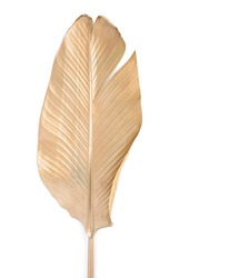Golden leaf isolated on white.