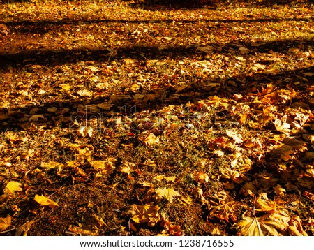 Golden leaves on grass background. Trees shadows on ground. Meadow with maple leaves photo. Autumn lawn with fallen leaves. Fall season concept image for banner template. Defoliation in autumn season.