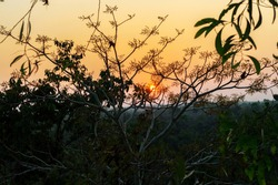 Golden light of the sun behind the branches of a tree surrounded by Green trees and Green Leaves in Indian village tourist spot, Red sunlight, sunset, sundown, sunrise, tree trunk, Shadow environment