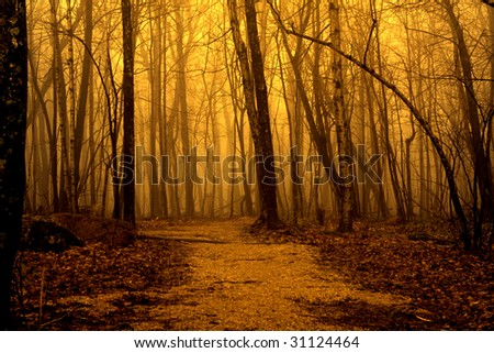 Golden lighted path in the forest
