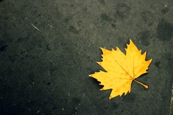 Golden maple leaf on black background
