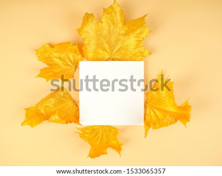 Golden maple leaves as a template, the template. #1533065357