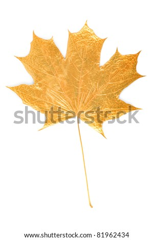 golden maple tree leaf on white