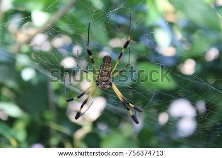 Golden orb spider #756374713