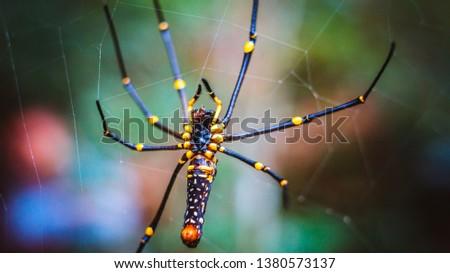Golden orb spider on web macro