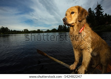 Golden Retriever at a lake