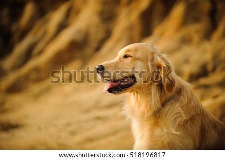 Golden Retriever dog against natural stone bluffs #518196817