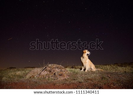 Free Photos Golden Retriever Silhouette At Sunset On A Field