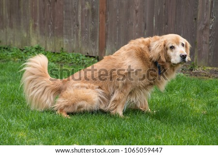 how to stop dog pee spots in yard