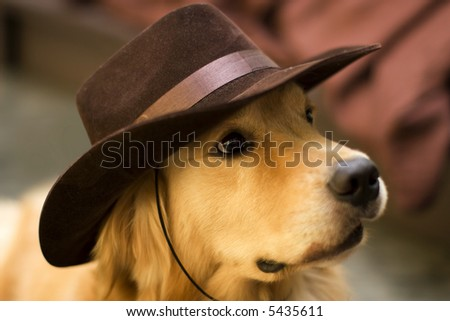 golden retriever dog with cowboy hat