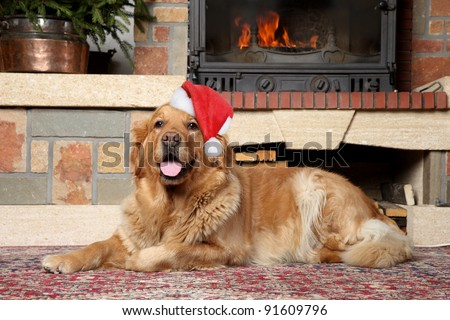Golden retriever in Santa xmas cap lies near fireplace