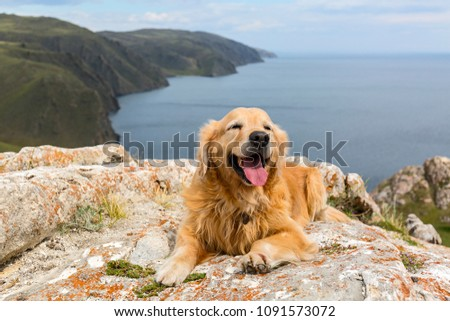 Golden Retriever lies on a stone in the summer against the lake #1091573072