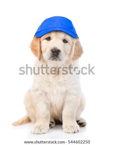 Dog-baseball Images and Stock Photos - Avopix com