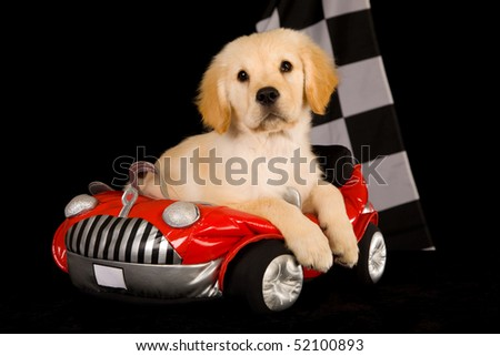 Golden Retriever puppy sitting in toy red car on black background