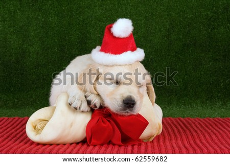 Golden Retriever puppy with Santa hat and huge bone with red bow