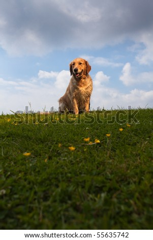Golden Retriever Sitting in Sunlight against cloudy sky