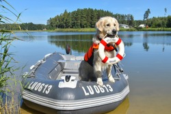 Golden retriever the lifeguard dog/baywatch dog in the boat
