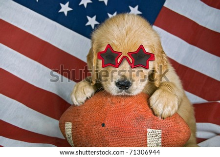 golden retriever with star sunglasses on football