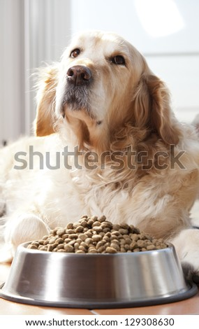 Golden retriver close to his cavity of fodder