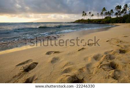 Golden sandy beach at sundown, tropical palm trees in the distance