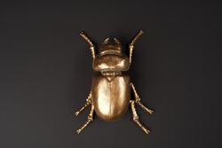 Golden scarab beetle on black background with copy space. Egyptian Scarab, close-up