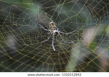 Golden silk orb weaver spider #1102512842
