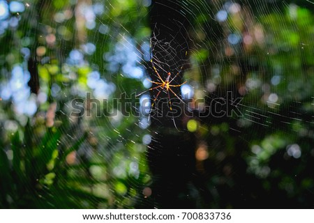 Golden Silk Orb Weaver Spider on a spider web with a bokeh and green background #700833736