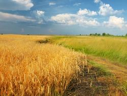 Golden Summer Landscape